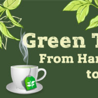 Green Tea Production Journey: From Harvest to Cup [Infographic]